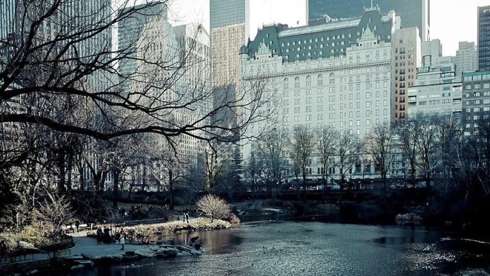 Beatle hotels
